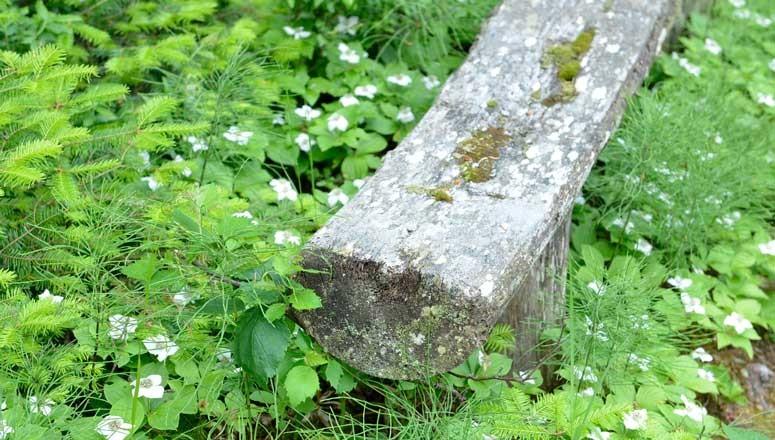 log-bench