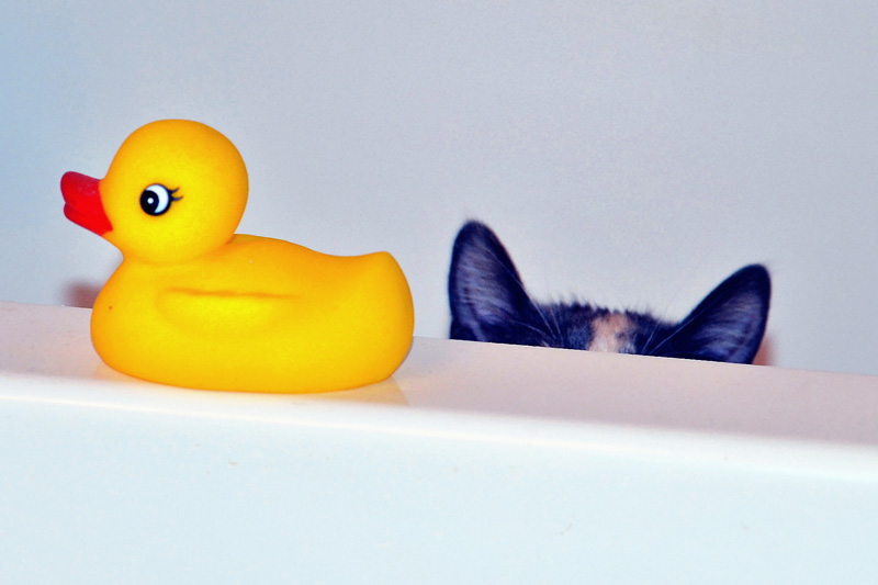 pudgy-and-rubber-duck