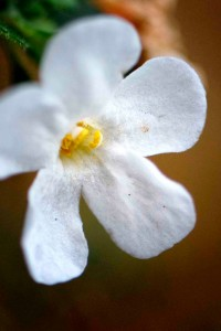 November White Flower