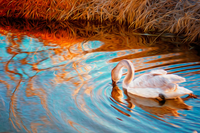 Swan Painting Altered