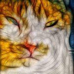 aging schmaging, cat