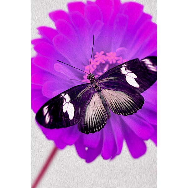 Butterfly photography Gail Gates