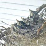 agingschmaging empty nest