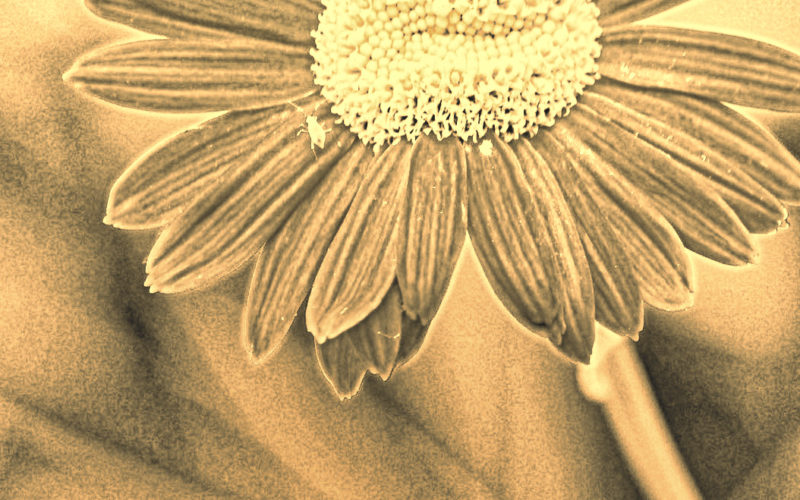 Making Mistakes And Not Beating Myself Up: Why A Poem About Picking More Daisies Matters