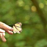 aging schmaging butterfly