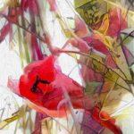 agingschmaging cardinal