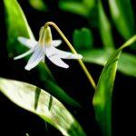 aging schmaging flowers