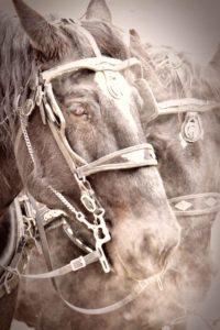 agingschmaging horses