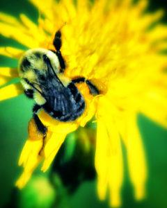 agingschmaging bees