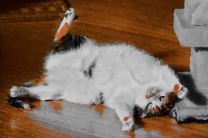 agingschmaging cats and health