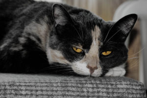 agingschmaging cats