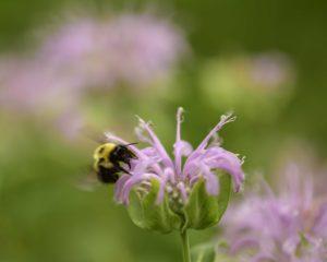 agingschmaging bee