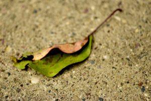 agingschmaging leaf
