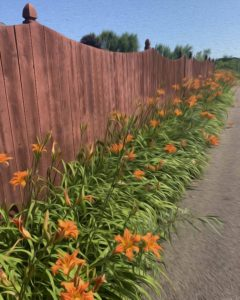 aging schmaging flower fence