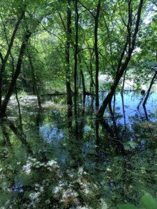 agingschmaging swamp