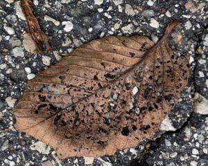 agingschmaging bug eaten