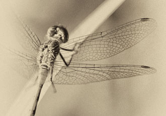 On Wings of Lace