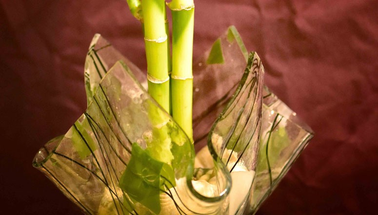 Midlife and Getting Lucky in 2016…Lucky Bamboo That Is!