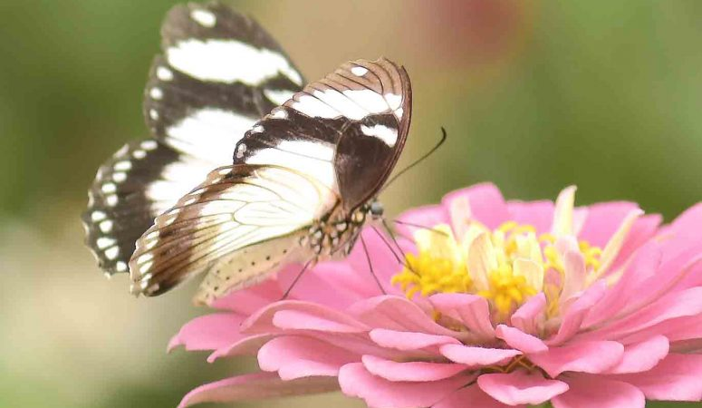 Flying Blossoms: A Head's Up On Midlife Creative Inspiration