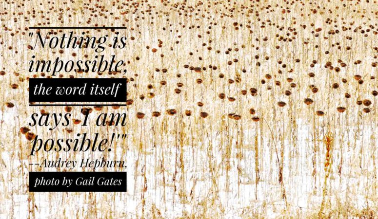 Happy thought for the day…(along with a new photo from me!)