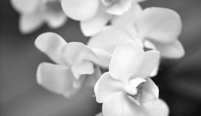 The Flower: A Withering Life Lesson