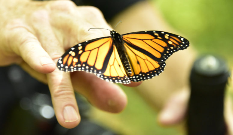 Two Lovers, a Dog, and a Butterfly: A Day In This Midlife Woman's Life