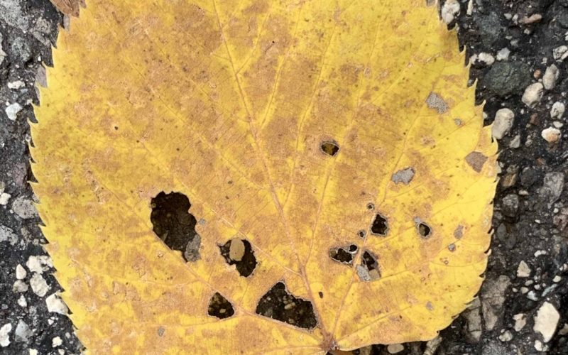 Leaf It To Me To Adore Imperfections